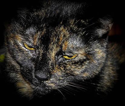 Christy Usilton - Old Grumpy