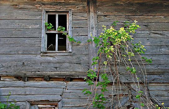 Old House by Dimitar Smilyanov