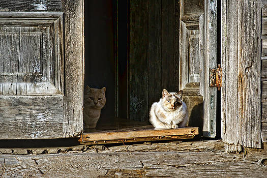 Nikolyn McDonald - Old Knox Church Cats