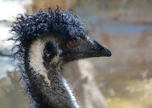 Old Man Emu by Lynette McNees