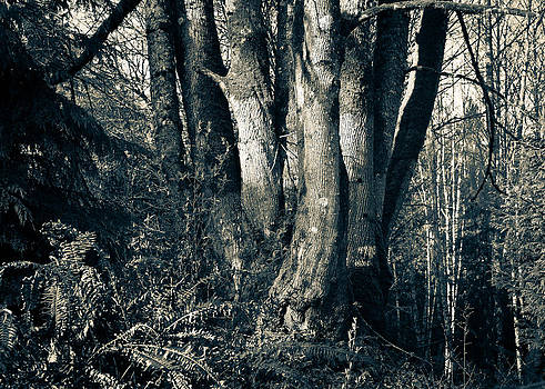 Ronda Broatch - Old Maple
