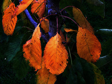 Old Orange Leaves by Scott Hill