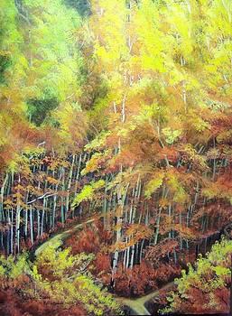 Old Paths Divide by Lori Salisbury
