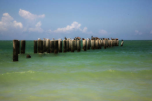 Old Pier  Naples Bay by Carol Kinkead