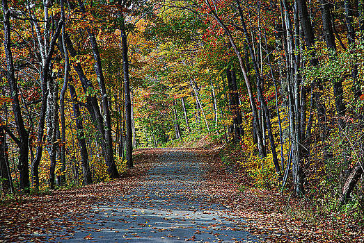 Old River Road North Creek  by David Seguin