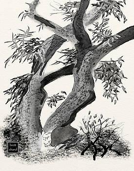 Old tree by Brett Shand
