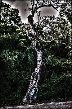 Joe Bledsoe - Old Tree