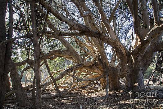 Old tree by Jose M Beltran