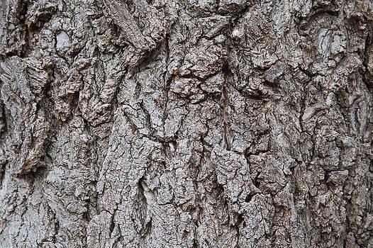 James BO  Insogna - Old Tree Trunk Bark Texture
