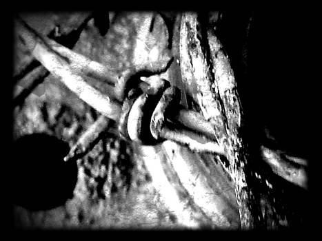 Old Wire by  Jeff Mantz Rhodes