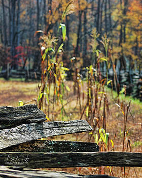 Old wood by Robin Lewis