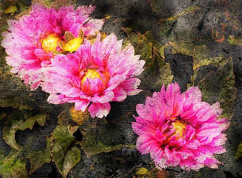 Old World Flowers by Virginia Folkman