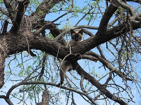 Oli Up a tree by James Bones Tomaselli
