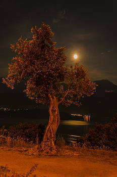 Olive Tree under Moonlight by Jeffrey Teeselink
