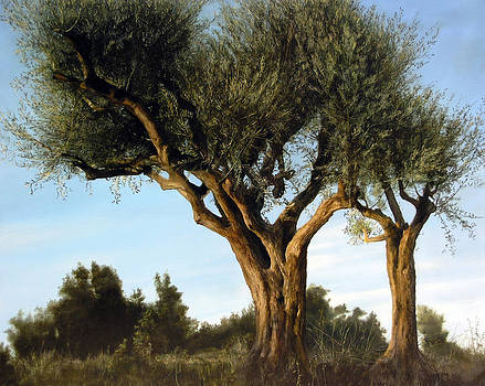 Olive Trees by Thomas Darnell