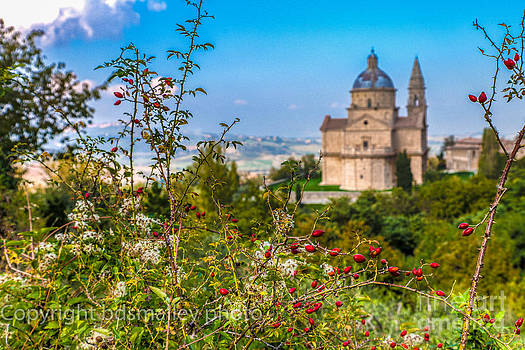 Olives before the cathedral  by Bruce Smalley