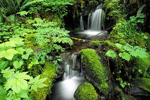 Olympic Rain Forest by Russ Bishop