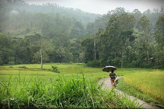 A tropical paradise by Ajithaa Edirimane