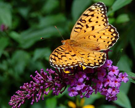 On the Butterfly Bush by Rhonda Van Pelt