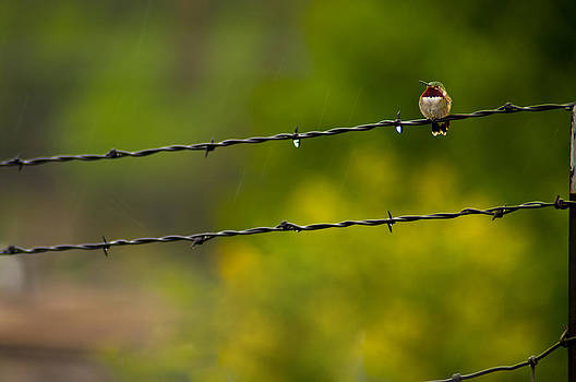 Eric Rundle - On The Fence