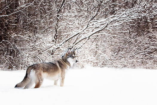 On the Hunt by Karen Varnas