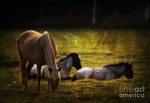Angel Ciesniarska - on the meadow
