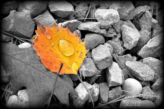 On the rocks by Terri K Designs