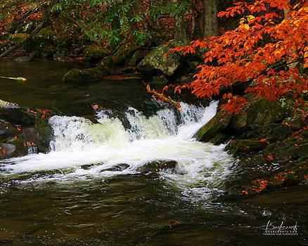 On the Rocks with a Twist of Orange Autumn in the Smokey Mountains by Robin Lewis