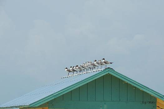 On The Roof by Judy  Waller