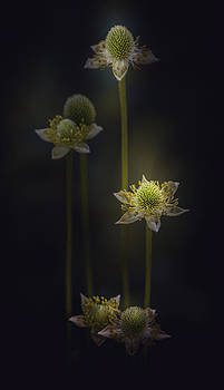 On The Way Up by Paul Barson