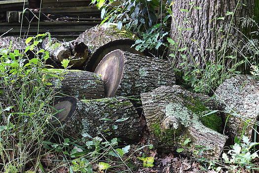 Bishopston Fine Art - Once a Mighty Oak