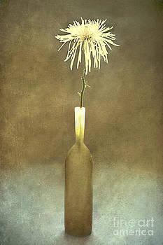 One by Barbara Corvino