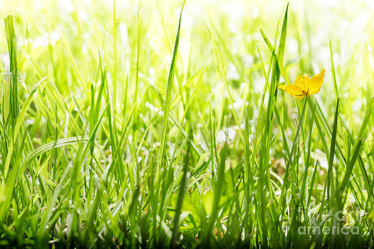 Jo Ann Snover - One buttercup