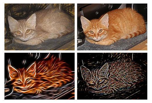 One Cat Four Looks by David Yocum