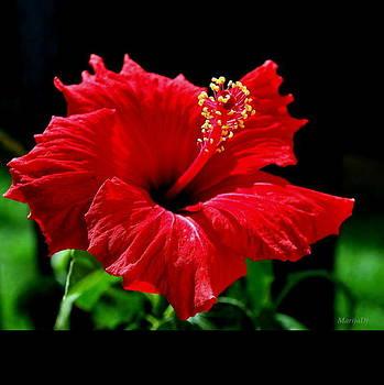 One day flower by Marija Djedovic