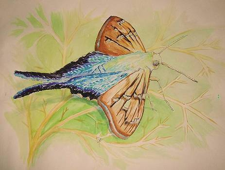 One Day in a Long-tailed Skipper Moth's life by Nicole Angell