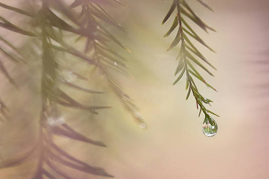 One Drop by Maria Robinson