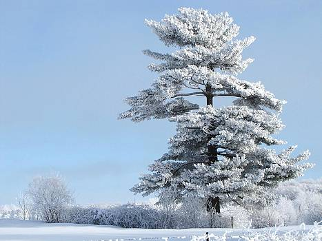 One Frosted Tree by Lori Frisch