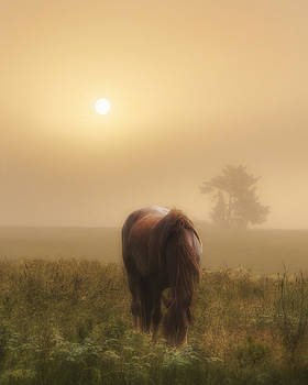 One Misty Morning by Ron  McGinnis