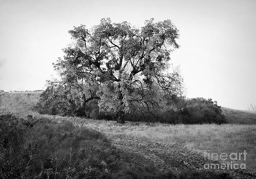 Chuck Kuhn - One tree Bw