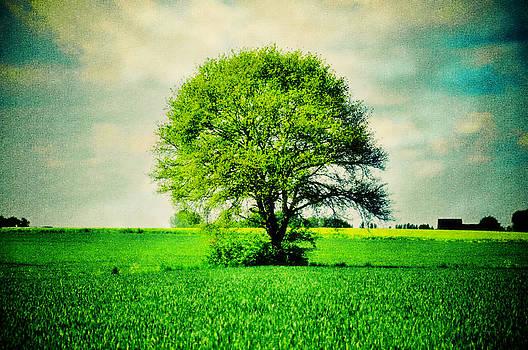 Nicole Frischlich - One Tree for All