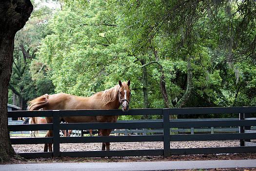 One Very Pretty Hilton Head Island Horse by Kim Pate