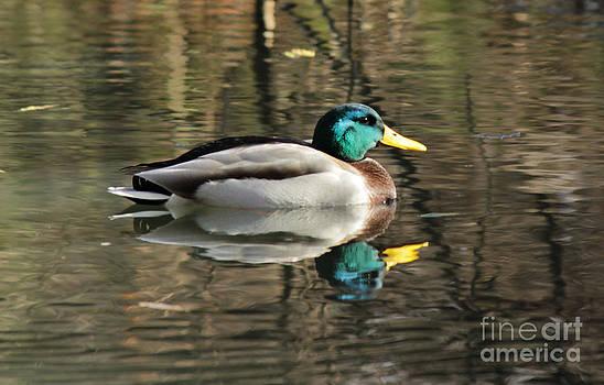 One's Reflection by Vikramjit Sra