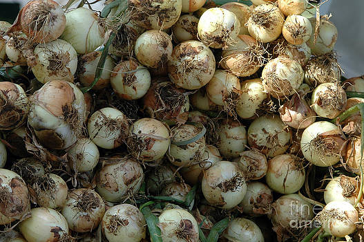Onions by Angela Kail