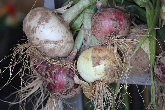 Onions by Charlotte Craig