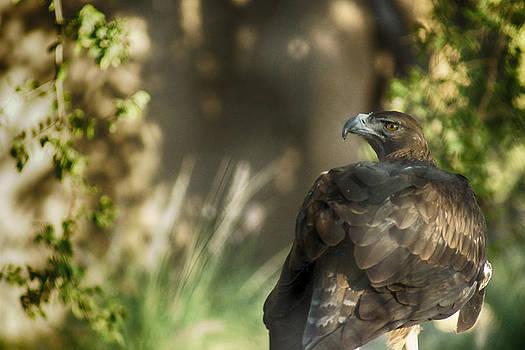 Munir El Kadi - Only an eagle can be as sharp as an eagle