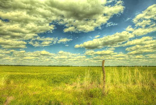 Open field by  Caleb McGinn