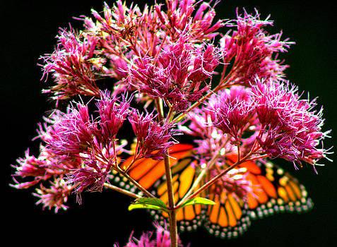 Open Monarch by Leah Reynolds