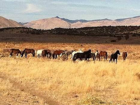 Open Range by Wynema Ranch