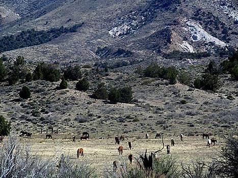 Open Space by Wynema Ranch